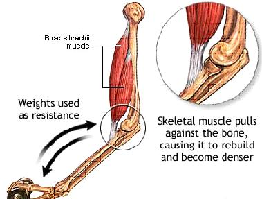 How to improve the bone strength? bones are surrounded with muscles