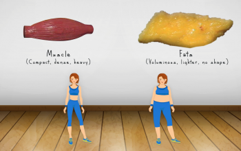 Weight loss VS Fat loss/ Difference between Muscles and Fat